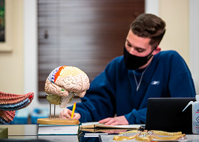 Student in a lab taking notes with a model of the human brain in the foreground