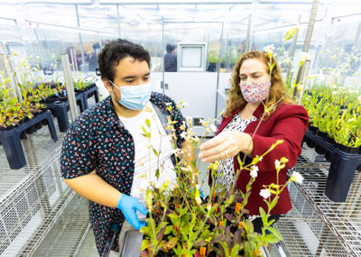 Two students examining a plant in a greenhouse
