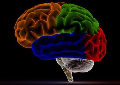 4-color brain